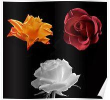 Rose Compilation Poster