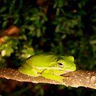 Mr Tree Frog by DottieDees