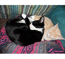 Snoozing Kittens Photographic Print