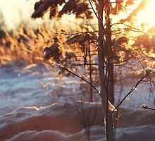 Magical winter forest III by MsDunwich
