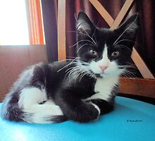 Black and White Adorable Kitten by Barberelli