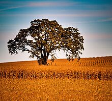 Lone Burr Oak in Cornfield at Sunrise by Roger Passman