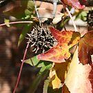 leaves 2 by crosses