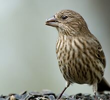 Finch by Bonnie T.  Barry