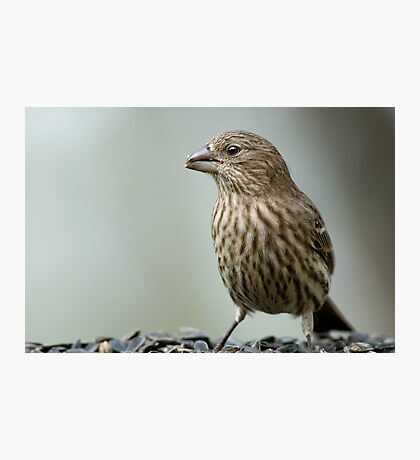 Finch Photographic Print