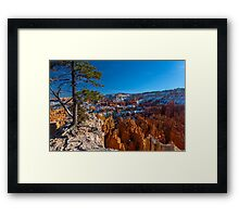 Barely Holding On, Bryce Canyon Sunrise Point Framed Print