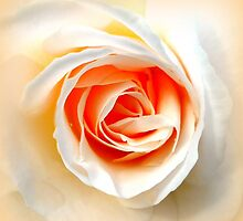 Rose Detail by ©The Creative  Minds