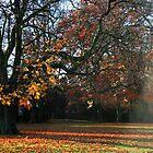 Autumn Dreaming by Stephanie Hillson