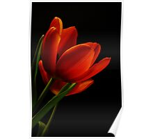 The Tulips * Wall Art Poster