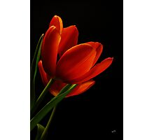 The Tulips  Photographic Print