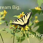 Dream Big, Fly High by CardLady