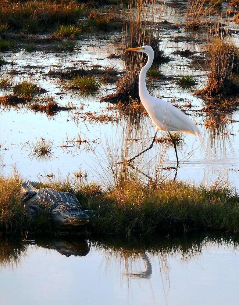 Detente: Egret and Gator by Charlie Sawyer