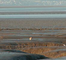 Mud flats at eventide by fionajean