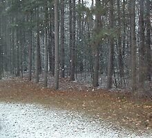 Sticks and Snows by Deb  Badt-Covell