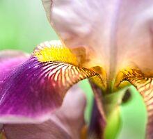Bright Details. Macro Iris Series by JennyRainbow