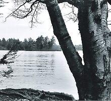 Tricky Pond by betsy8897