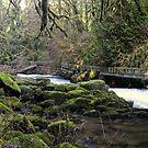 Cedar Creek & Flume - North Clark Co. by Mark Heller