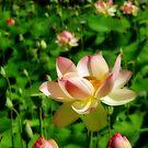 Botanic Flower-Orton Effect by Greg Hamilton
