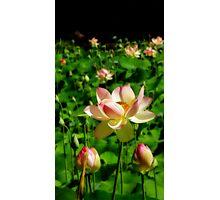 Botanic Flower-Orton Effect Photographic Print