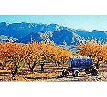 Apricots in the Fall Photographic Print