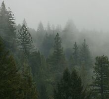 santa cruz mountains by Nicole M. Spaulding