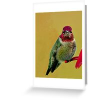 "ANNA""S HUMMINGBIRD Greeting Card"