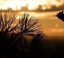 Sunset Silhouette by Lolabud