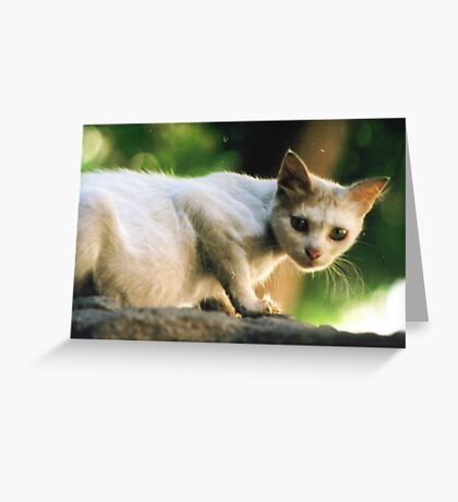 Egyptian Stray Greeting Card