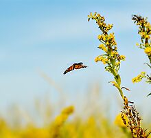 You can chase a butterfly all over the field and never catch it...  by VLFatum
