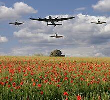 Over The Poppy Fields  by J Biggadike