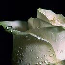 Wet by Pamela Hubbard