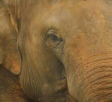 The Elephants beauty  by Of Land & Ocean - Samantha Goode