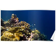Soft Coral Garden Poster