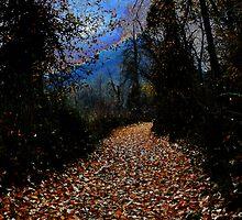 Autumn path by Anne Murphy