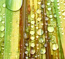 Shower Curtain by Sharon Johnstone