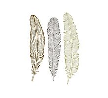 Golden feather Photographic Print