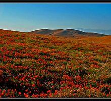 Antelope Valley by Chet  King