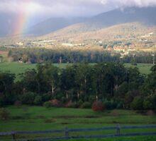 The Yarra valley near Melbourne, Australia by Alina Holgate