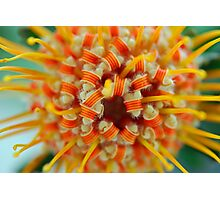Orange Pincushion Protea Centre Photographic Print