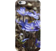 Blue Kidneywort Flowers Closeup iPhone Case/Skin