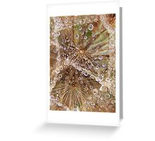 Jewels in the crown- Tragopogon porrifolius- Salsify Greeting Card