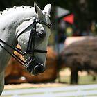 Horses by Denzil