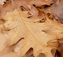 Autumn... by Nuh Sarche