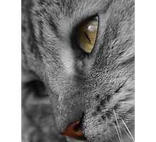 Tabby Cat with Soulful Eyes Photographic Print