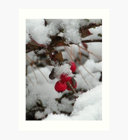 twig and berries...(not those, you sillies) Art Print