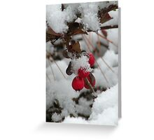 twig and berries...(not those, you sillies) Greeting Card