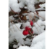 twig and berries...(not those, you sillies) Photographic Print