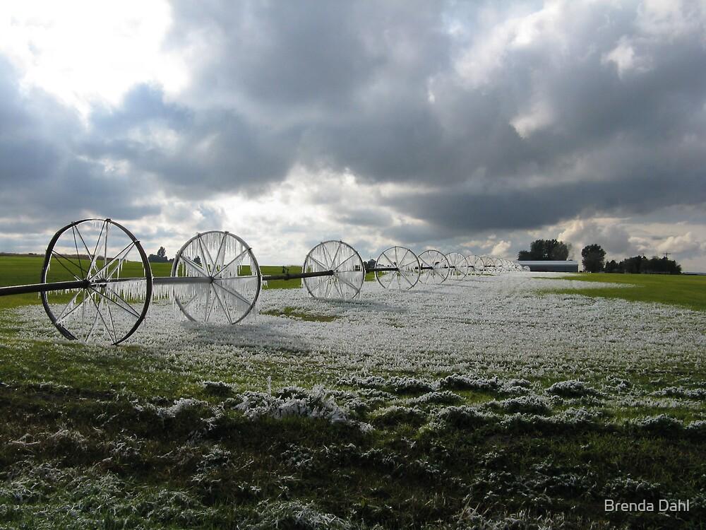 Frozen in time by Brenda Dahl