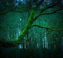Lone Branch by bmosborn