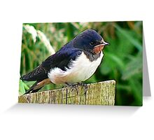 The Swallow Greeting Card
